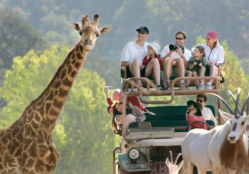 Safari West Resort is located in Sonoma Valley, California